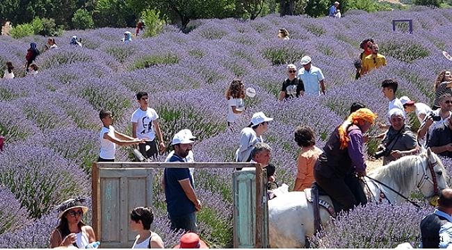 Isparta'nın lavanta turizmindeki ziyaretçi sayısı belli oldu