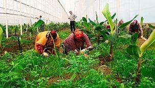 Turizm çalışanları tarım işçisi oldu!
