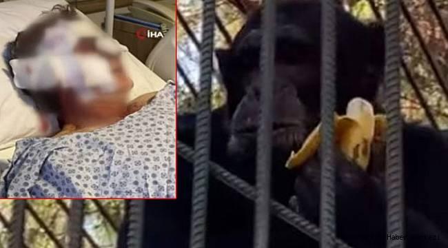 Otelin bahçesinde tutuluyordu! Kafesinden kaçan maymun otel çalışanını hastanelik etti