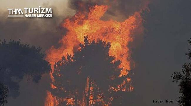 Manavgat oteller bölgesinde yeni yangın! Silahını alan ormana koştu