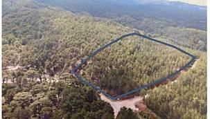 Yeni Titanic Otel vakası! İşte otel yapımı için turizme açılan ormanlık alanlar