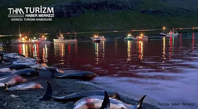 Böyle festival olmaz olsun!1428 balina ve yunus öldürüldü