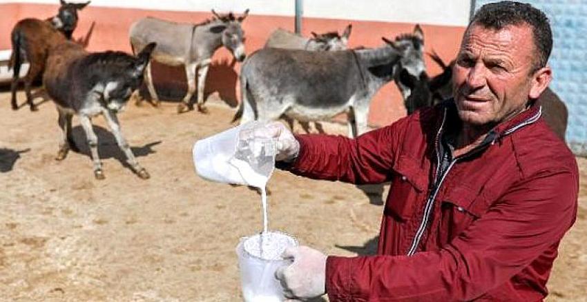Turizmi bıraktı eşek sütü satmaya başladı! Siparişlere yetişemiyor